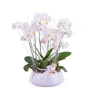 Centrepiece of white Phalaenopsis plants